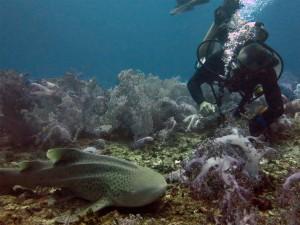 Sharkpoint - Tauchplätze Phuket Thailand