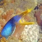 Tauchkruse Thailand - Discover Scuba Diving