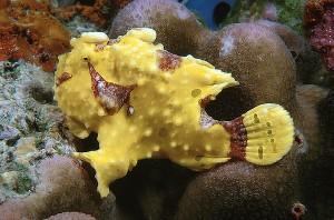 Sharkfin Reef - Tauchplätze Similan Thailand