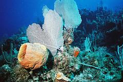 Super Korallen bei Koh Bida Nai in Phi Phi Island.